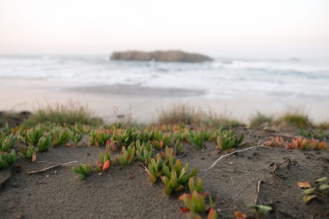 Plant life along the Oregon Coast