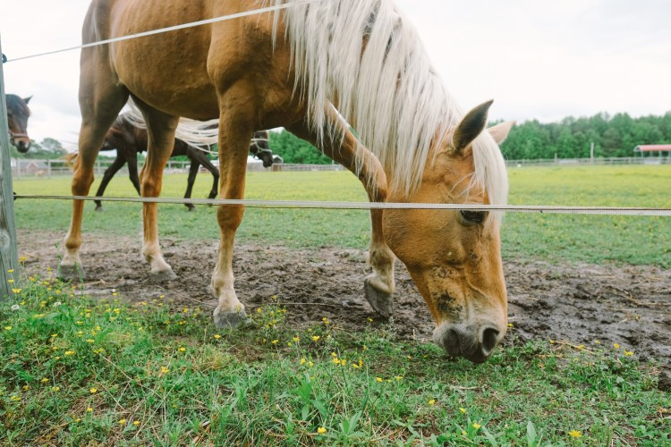 A horse behind an electric fence