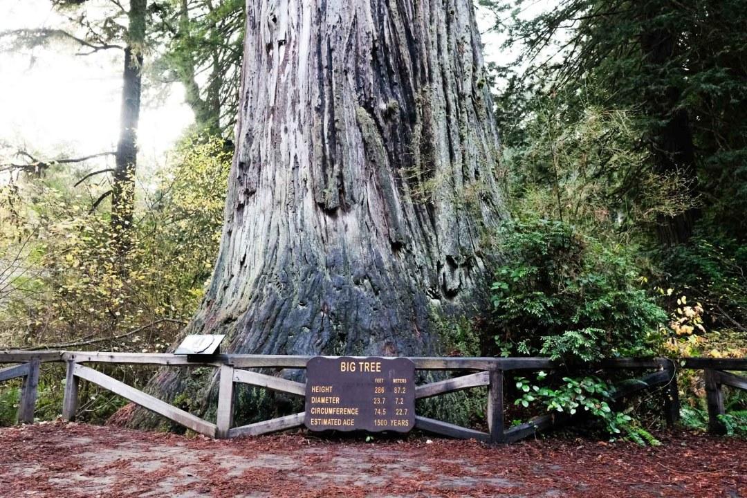 Redwood National Park 1