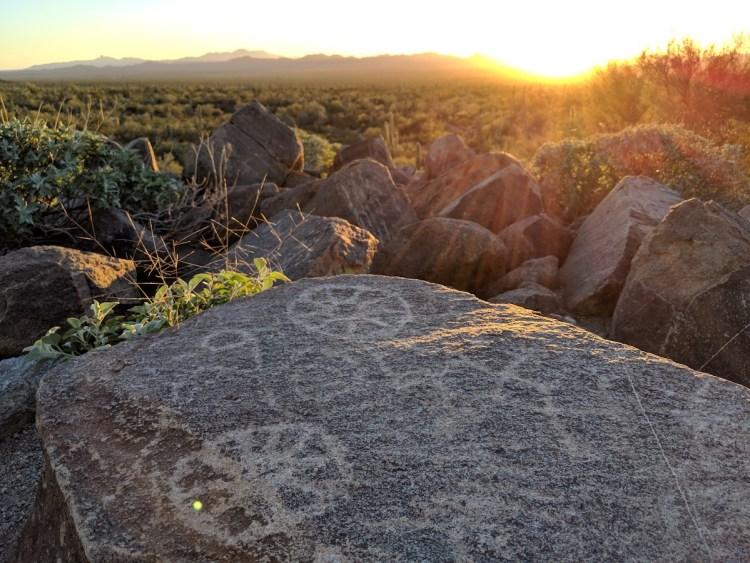Visting Saguaro National Park | Southwest, USA