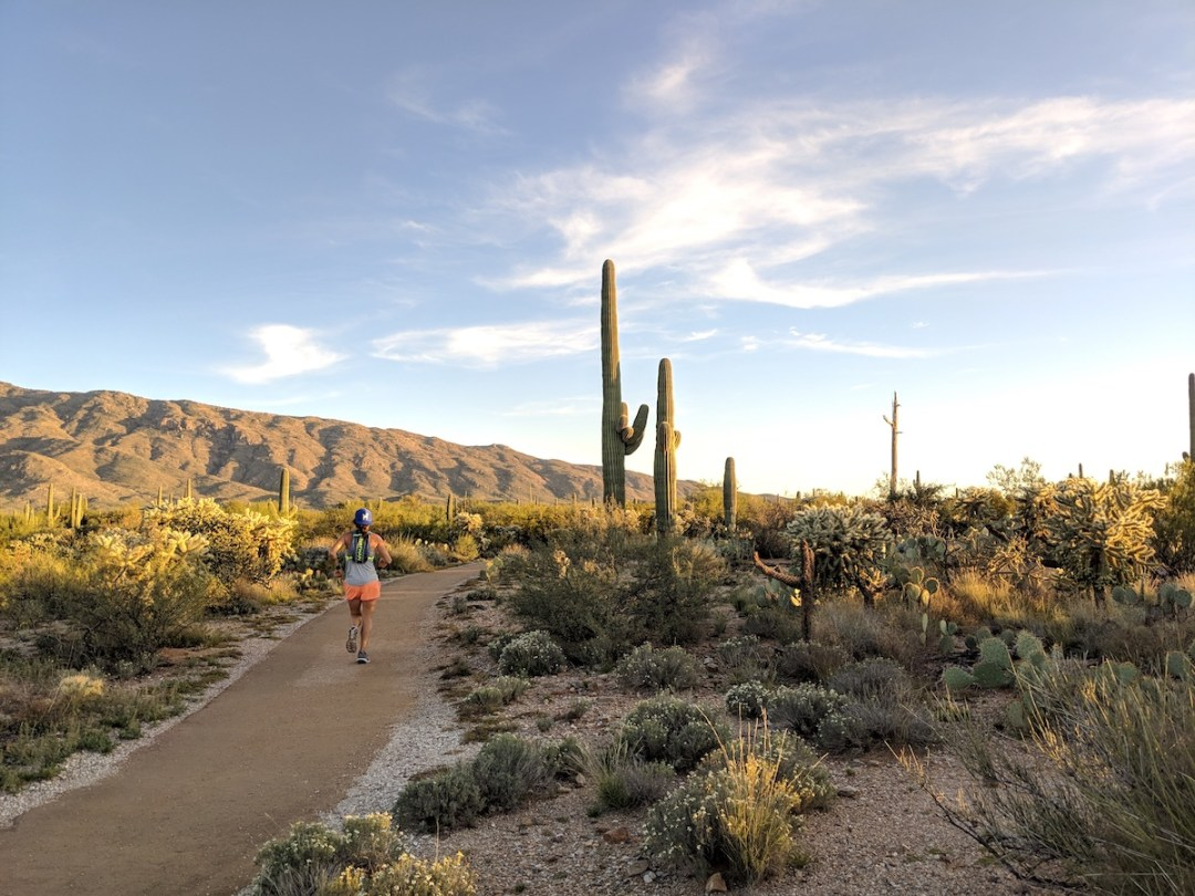 Visting Saguaro National Park | Southwest, USA