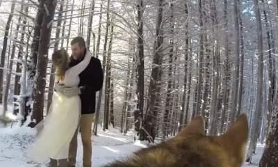 nunta caine