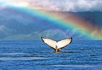 whale_watching_from_maalaea_002