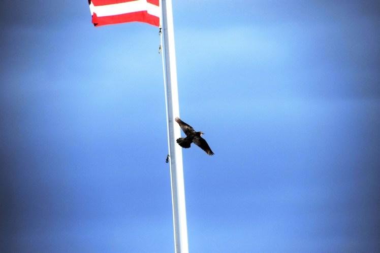Georgia bird