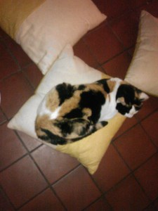 The calico cat on a cushion