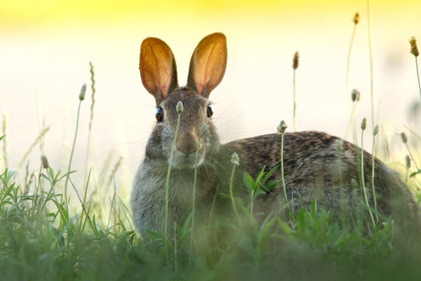 photo of rabbit in a field looking startled