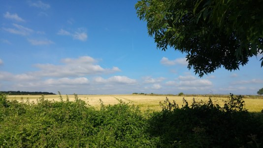 photo of golden cornfield