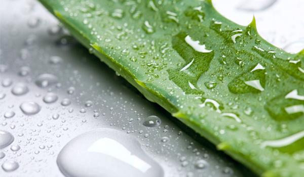 Aloe Vera - Home remédios para a perda de cabelo