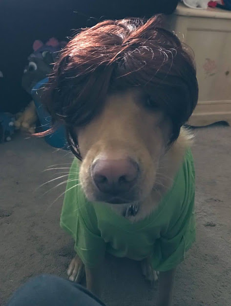 Fionn dressed as Shaggy Rogers