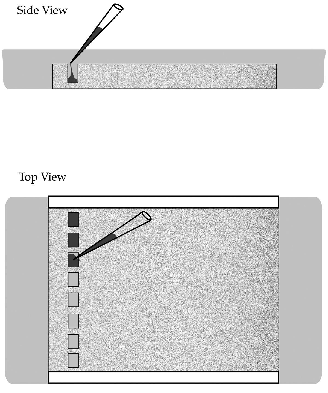 Gel Electrophoresis Kit