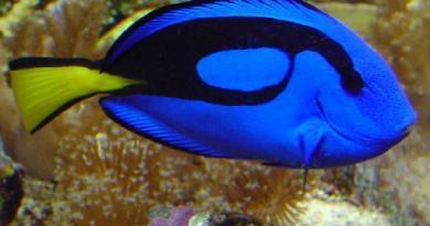 fish had autism