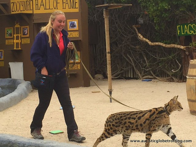 Family Fun at the California Moorpark Teaching Zoo kitty