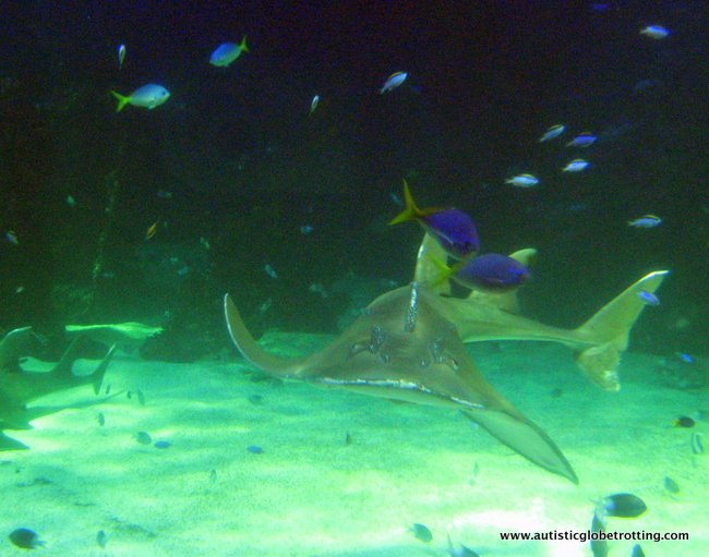 Family Friendly Aussie Experiences to Enjoy in Sydney shark