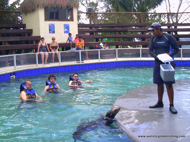 Riviera Maya's Best Aquatic Adventure Parks for Kids With Autism sealions