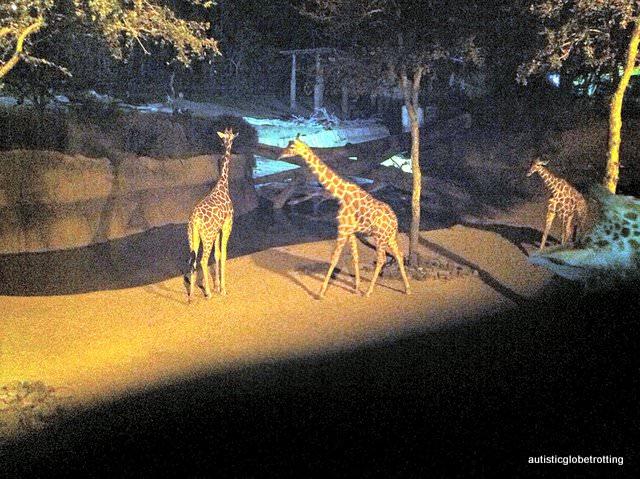 Five Sensory Attractions worth visiting in Dallas giraffes