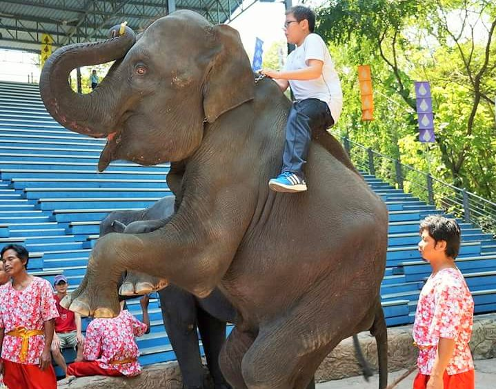 Taking Your Kids With Autism to Bangkok Thailand elephant