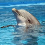 Animals and autism – Ethics and Safety Part 7