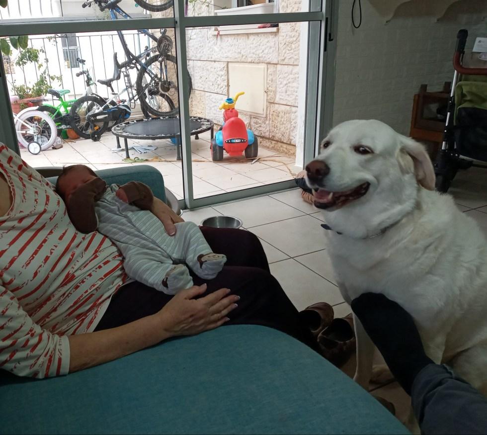 גם מון, הכלבה, מקבלת בשמחה ילד נוסף במשפחה מיוחדת