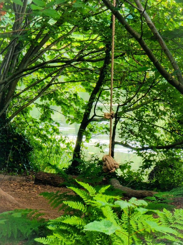 A rope swing on the woodland trails at finnebrogue woods