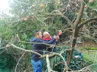 con lo zio raccogliendo frutta