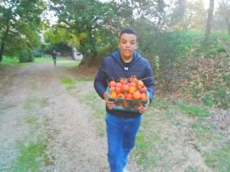 Camminata faticosa per trasportare la frutta raccolta