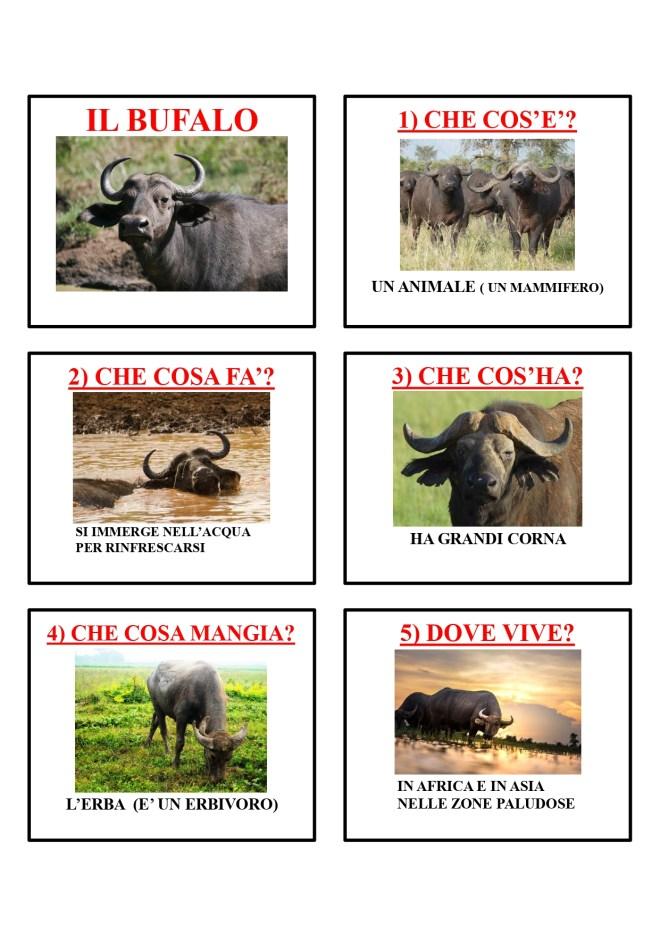 gli animali-i mammiferi_page-0005