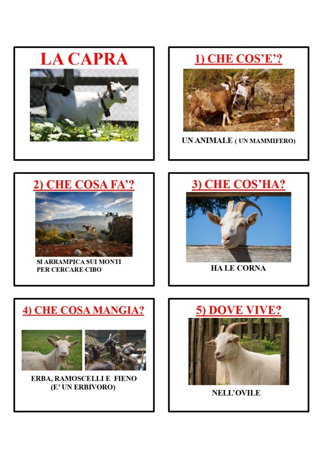 gli animali-i mammiferi_page-0009