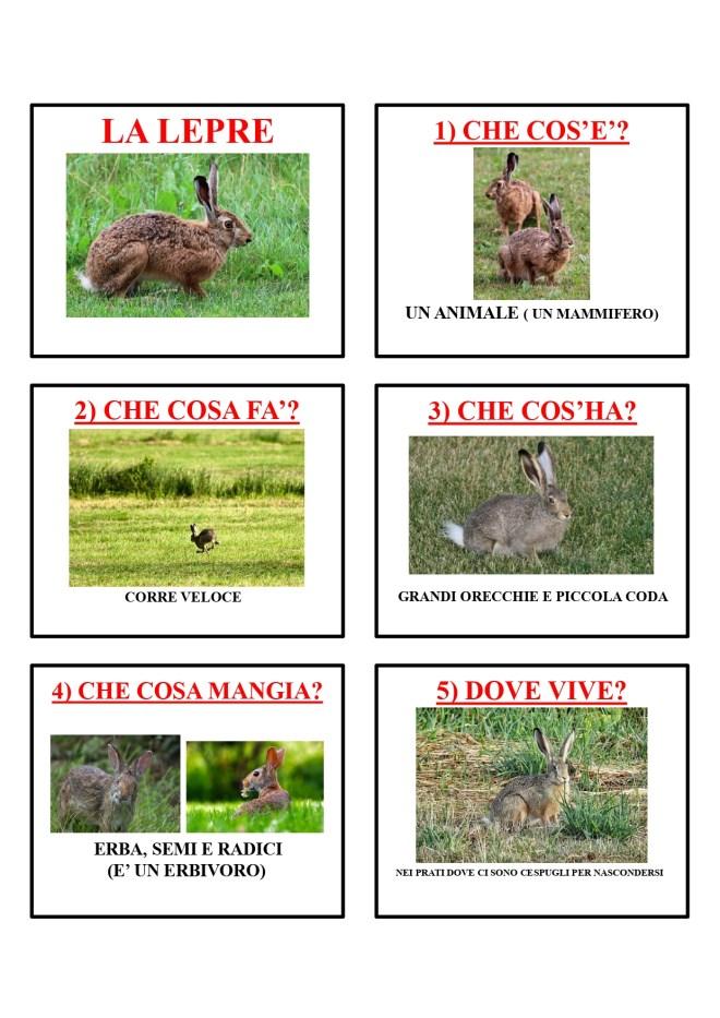 gli animali-i mammiferi_page-0027