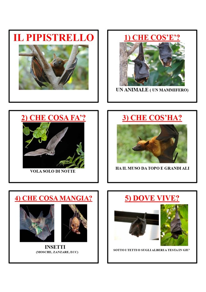 gli animali-i mammiferi_page-0035
