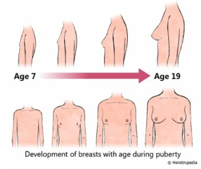 puberty-breast