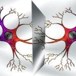 Neuronas Espejo, una explicación visual