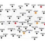 Identificadas nuevas mutaciones genéticas relacionados con el Autismo