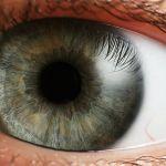 Disfunción visual en el Autismo