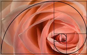 Espiral basada en la sucesión de Fibonacci. FEAPS lo usa en su logotipo
