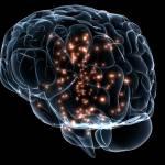 Investigadores descubren alteraciones en la corteza insular relacionadas con el desorden sensorial en el autismo