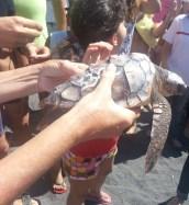 Tortuga Boba previo al momento de la liberación. Foto: Autismo Diario