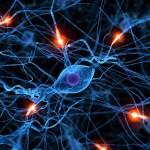 Los cerebros de los niños con autismo tienen mayor número de conexiones sinápticas