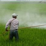 El efecto de los pesticidas en las células es similar a las señales del autismo