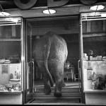 Dispraxia, el síndrome del niño torpe: ¿Elefantes en una cristalería?