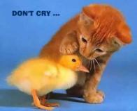 dont-cry--large-msg-116385755659