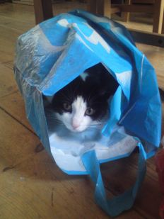 This is Guido. He likes sitting in plastic bags. He was purring.