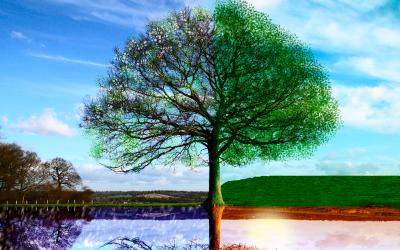 Qi Gong des quatre saisons : Le printemps