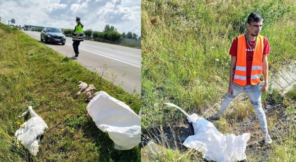 Kamioňák hrdina se pokusil zachránit rodinu labutí z dálnice. Bohužel se nepovedlo