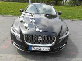 Jaguar XJ do ślubu dekoracja białe róże i tulipany