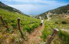 Stina Winery – Brač's second most famous export