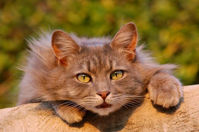 cat-401124_640_mini