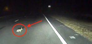 """""""Автопилот"""" Tesla рассмотрел кролика на ночной дороге и не допустил столкновения с животным"""