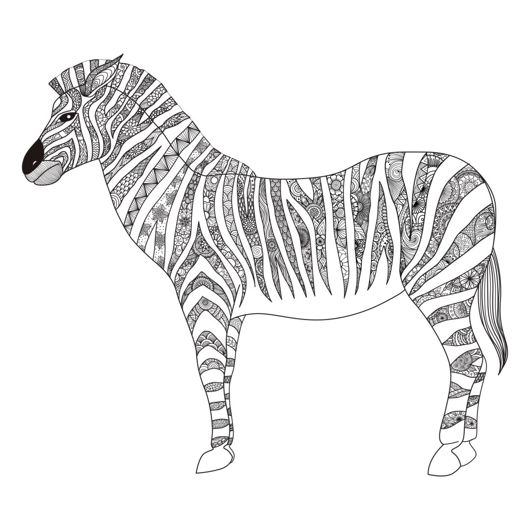 zebra 4 scaled - Cognitive Exercises for AE Patients