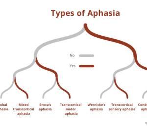 PNK IAES Aphasia Handout 300x168 - Autoimmune Encephalitis Handouts and Fact Sheets