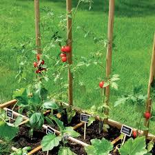 tuteurs de tomates